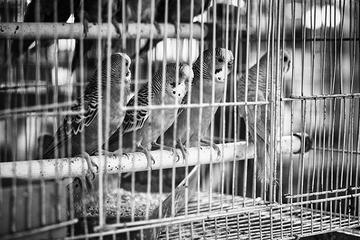 Jail Birds  foto Dai Luo