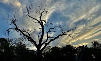 La sagoma di un albero spoglio