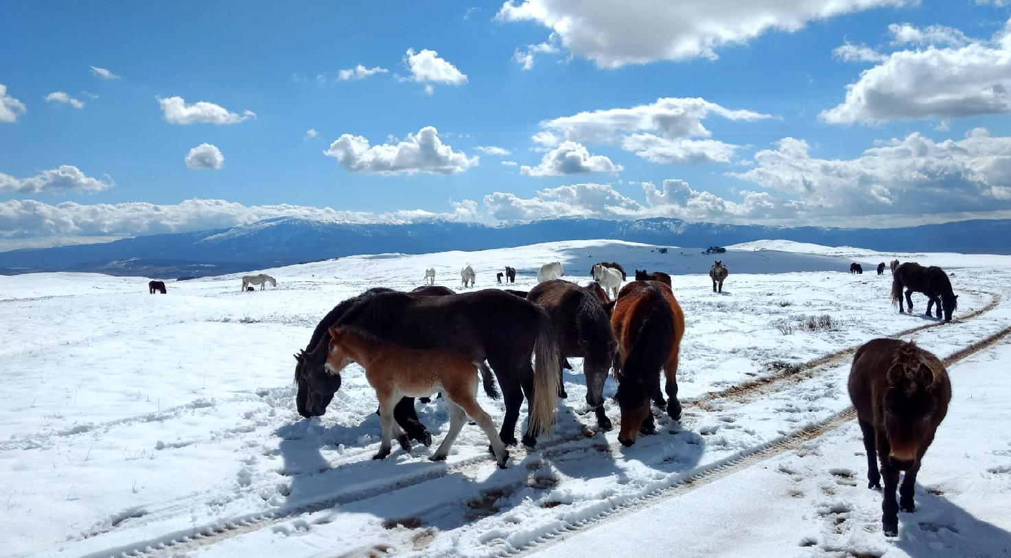 I cavalli di Livno - foto gentilmente concessa da Mario Jozić