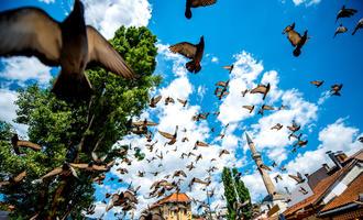 Sarajevo  (© RossHelen/Shutterstock)