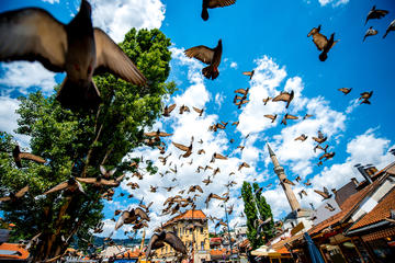 La vecchia piazza di Sarajevo con i piccioni in volo  (© RossHelen/Shutterstock)