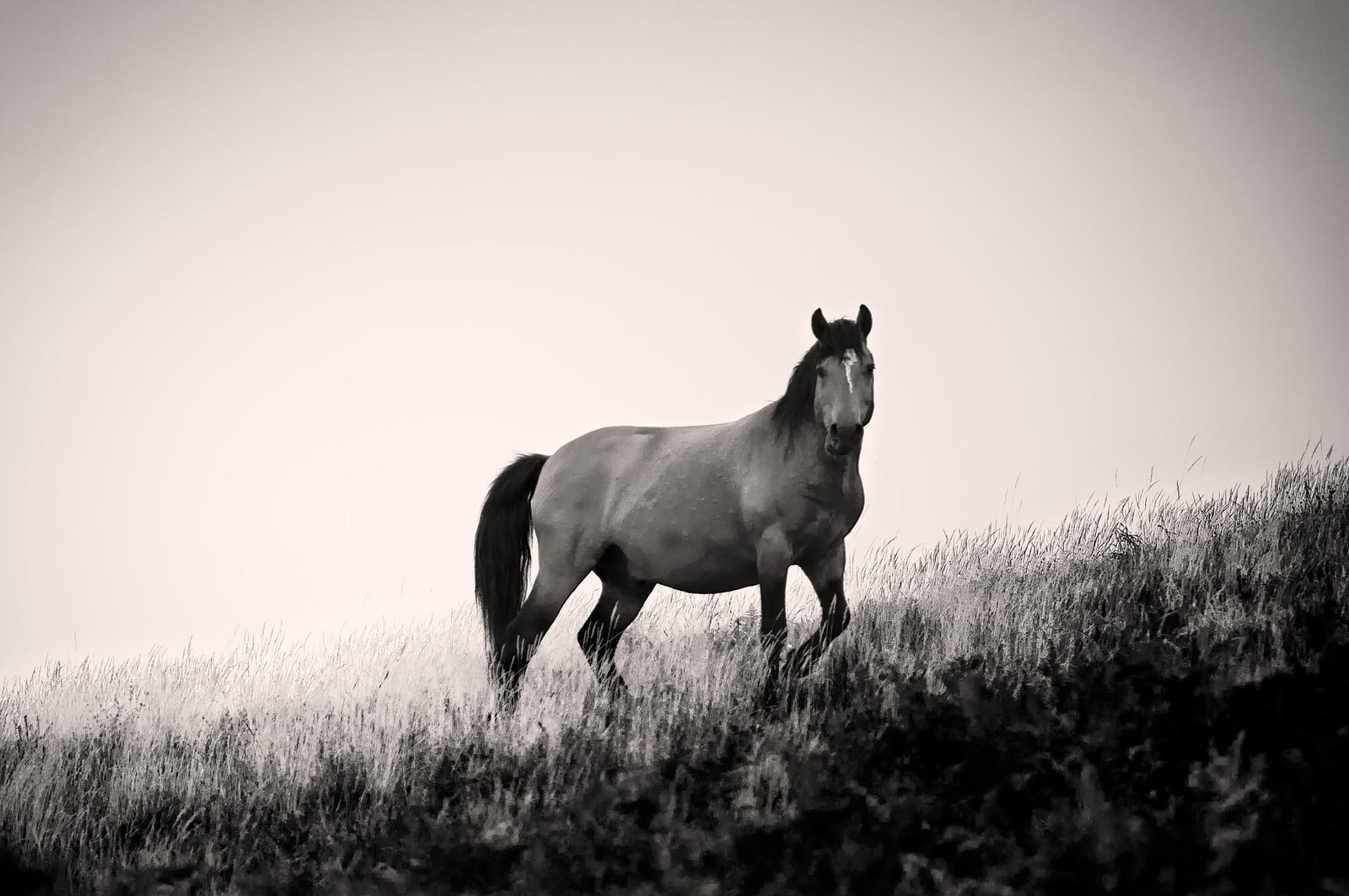 Wild horse (Foto Américo Dias, Flickr)
