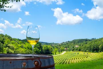 Bicchiere di vino bianco, sullo sfondo una vigna in Istria © Phant/Shutterstock
