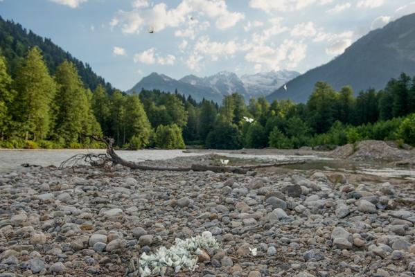 Lungo il fiume Nenskra (Tamuna Chkareuli/OC MEDIA)