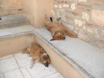 Cani all'Acropoli di Atene (foto Michael Condouris)
