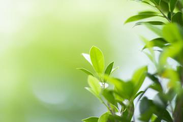 Foglie che simboleggiano attenzione all'ecologia - © Fahkamram/Shutterstock