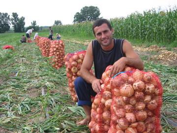 Raccolto in Moldavia - foto di Jerad Tietz, CC BY-SA 3.0