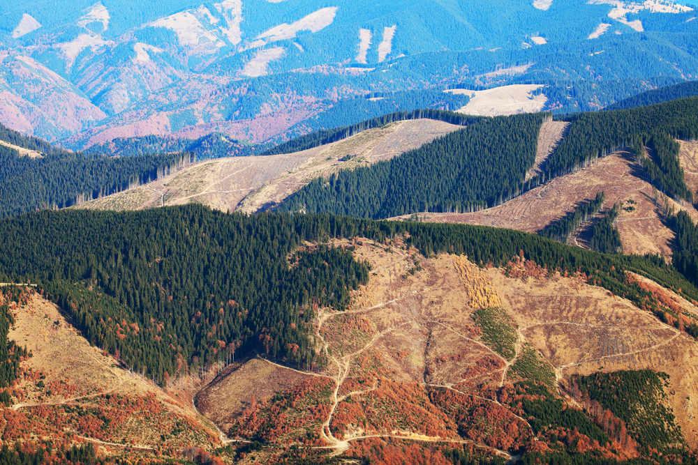 مناطق بزرگ جنگل زدایی شده در رومانی - © Mikadun / Shutterstock