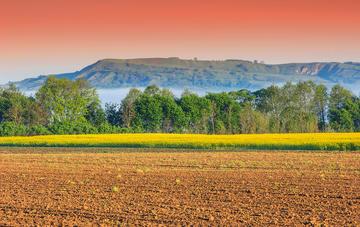 Un campo in Transilvania (© Gaspar Janos/Shutterstock)
