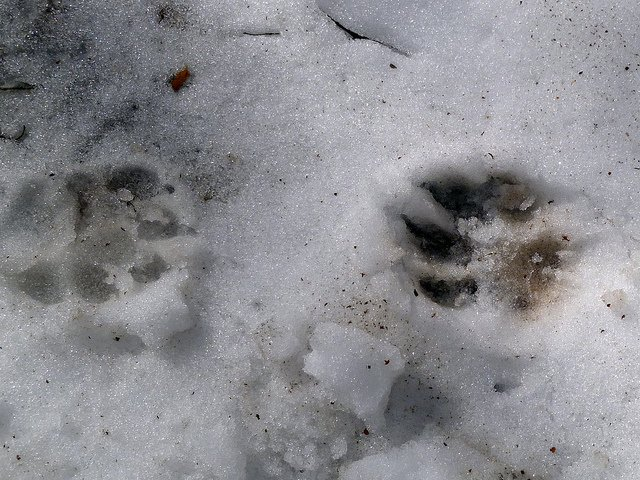 Dog prints, foto di Sean - Flickr.com