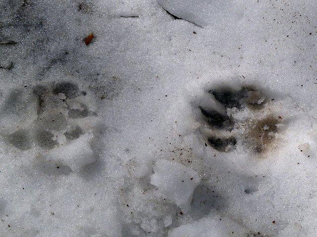 Dog prints, foto di Sean - Flickr.com