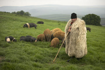Bazna - foto Ivo Danchev