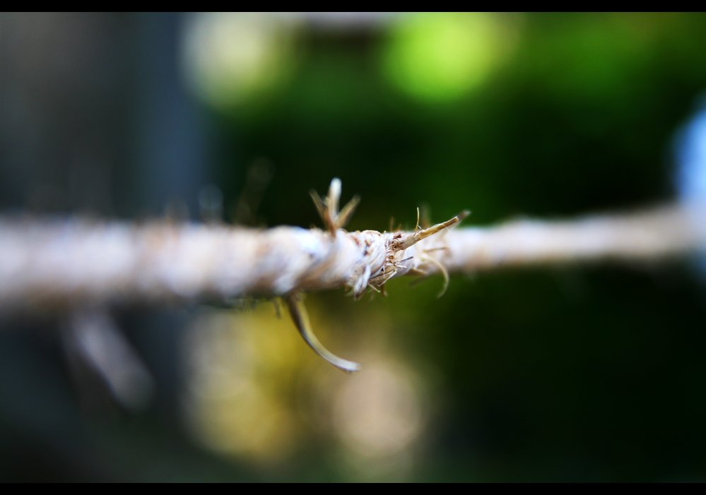 Vincepal - flickr