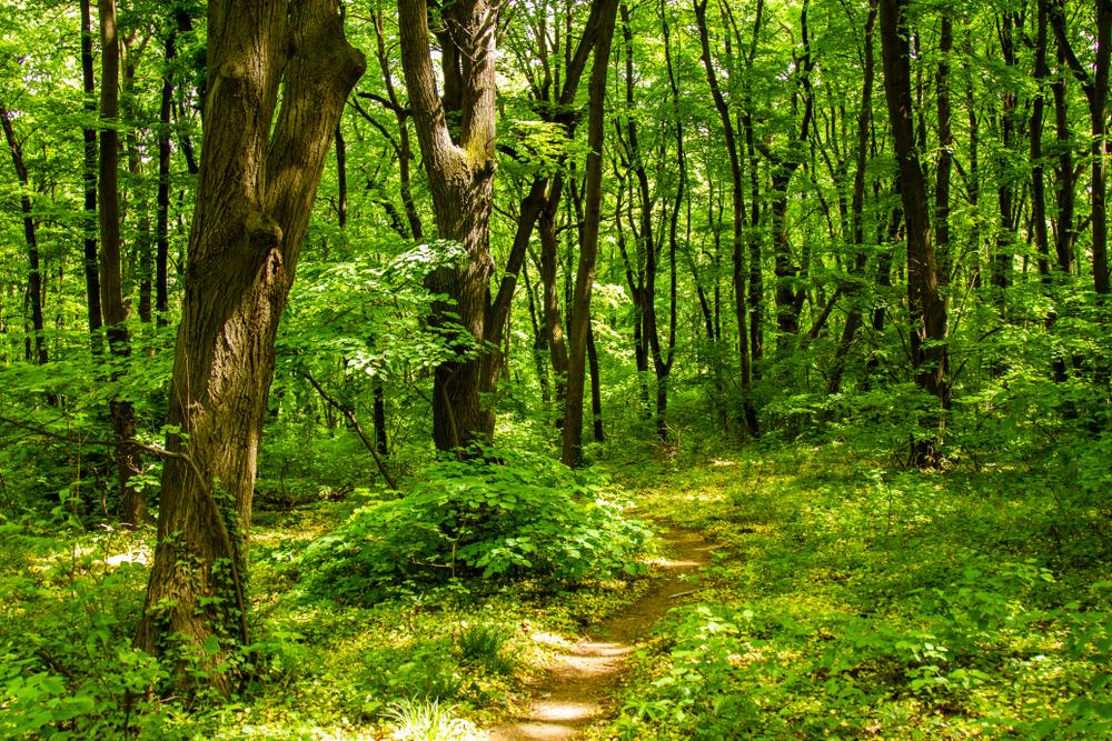 Il parco di Košutnjak - @Filip Olcan/Shutterstock