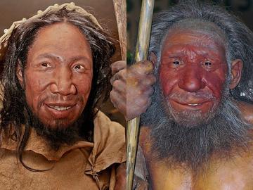 Homo sapiens sapiens e Homo neanderthalensis - Wikipedia