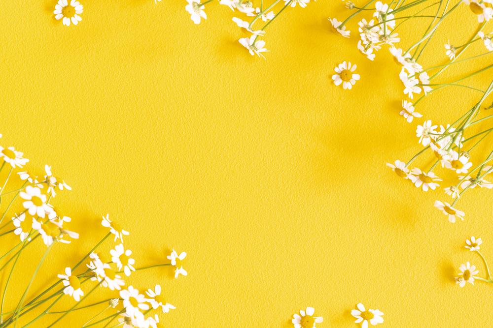 Composizione di fiori di camomilla su sfondo giallo (© Flaffy/Shutterstock)