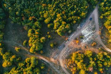 Lavori forestali in Romania (foto: © Beata  Angyalosi/Shutterstock)