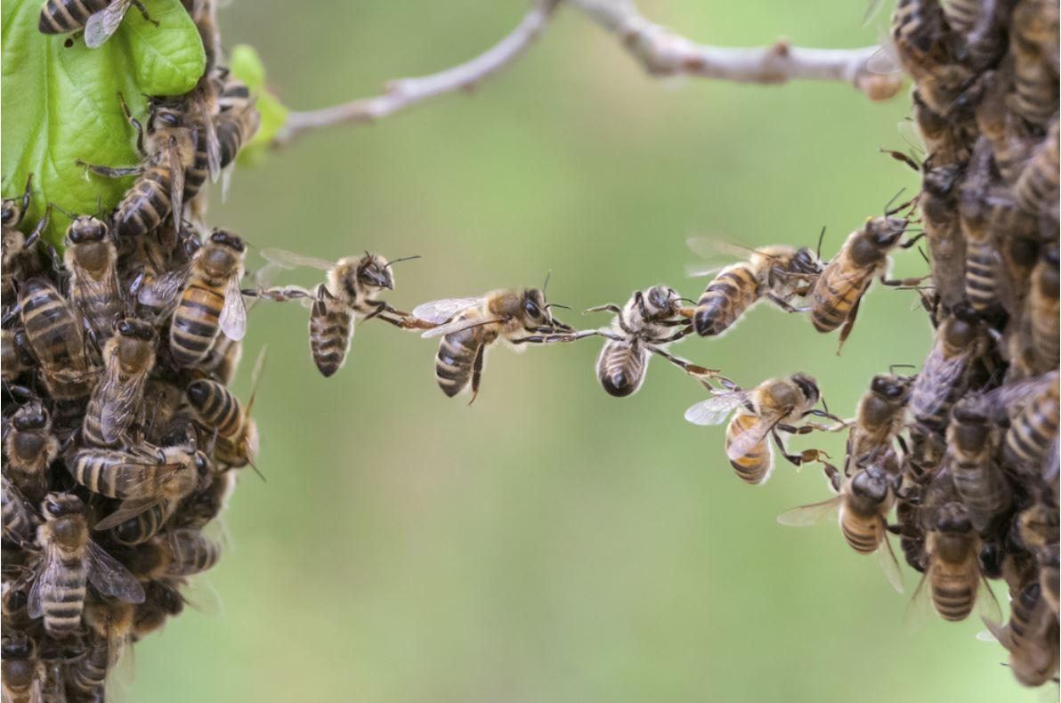 Bees at work - © Viesinsh/Shutterstock