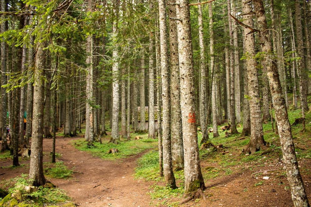 Un bosco nel parco del Durmitor (© Tijana Drndarski/Shutterstock)