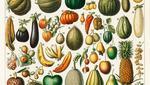 Frutta e verdura in Nouveau Larousse Illustré, 1898 (foto: Rawpixel Ltd/Flickr – CC BY 2.0 )