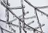 Rami ghiacciati durante l'inverno - Pixabay