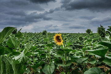 Slavonia (© sbedaux/Shutterstock)