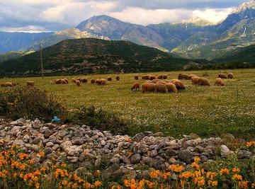 Albania rurale, foto di G.Godaj - Flickr.com.jpg