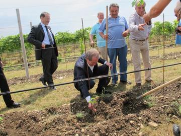 Piantumazione vitigni armeni in Provincia Treviso - da www.provincia.treviso.it