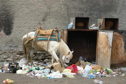 Un cavallo fruga tra i rifiuti (CharlesFred)