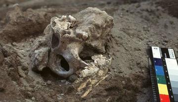Cranio ritrovato nel sito di Dmanisi - da www.ambtbilisi.esteri.it