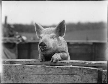 (Foto Boston Public Library, Flickr)