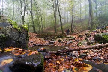 Autunno nel bosco in Croazia, foto di On The Go Tour - Flickr.com