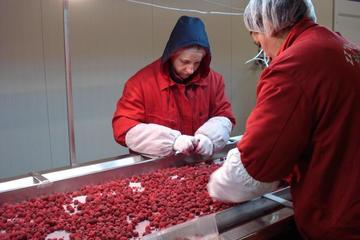 Cooperativa Insieme a Bratunac, operaie al lavoro