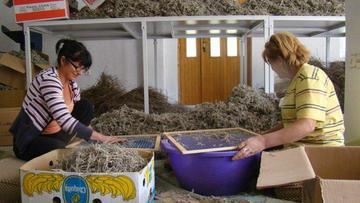 Donne della cooperativa Hercegovka al lavoro - www.tamat.org