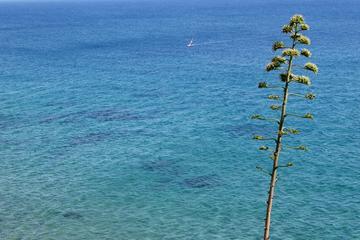 Agave, deep blue sea & windsurf