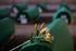 Srebrenica, bara con fiore