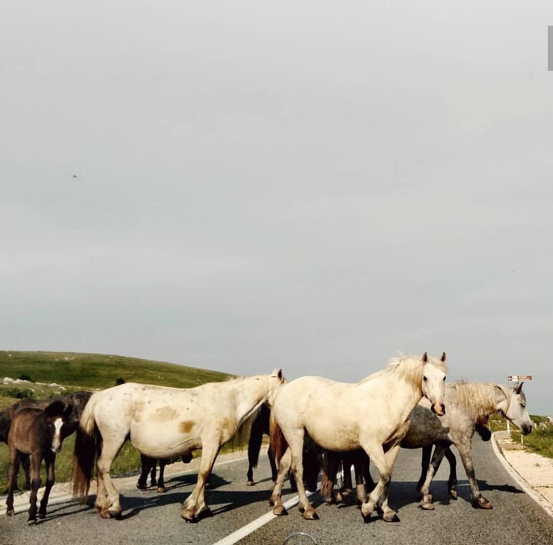 I cavalli di Livno - Mario Jozić