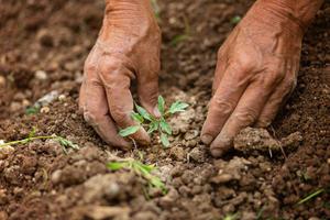 Una piccola pianta di pomodoro © Alina Bitta/Shutterstock