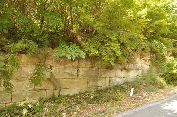 Una grossa radice fende la cortina del Vallum Anastasianum