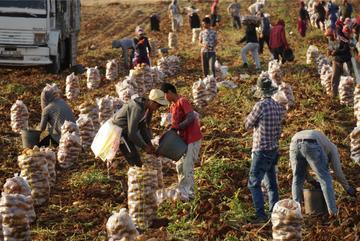 Turchia, rifugiati siriani al lavoro nei campi - ©  Alfa Net/Shutterstock