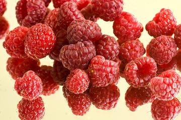 Raspberries, Serbia's Red Gold