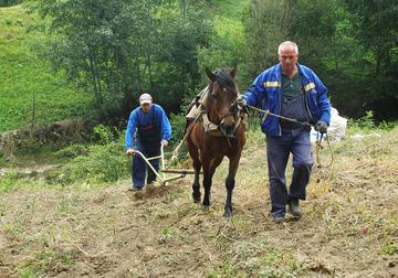 La famiglia Bashov al lavoro sui campi - T.Mangalakova